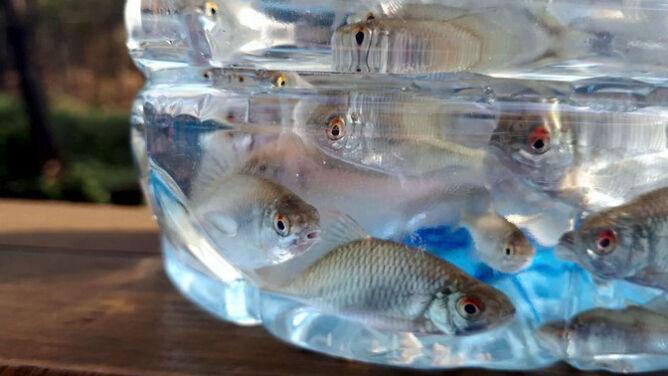 Setki małych rybek i małże. <br />To nowi mieszkańcy Zagożdżonki